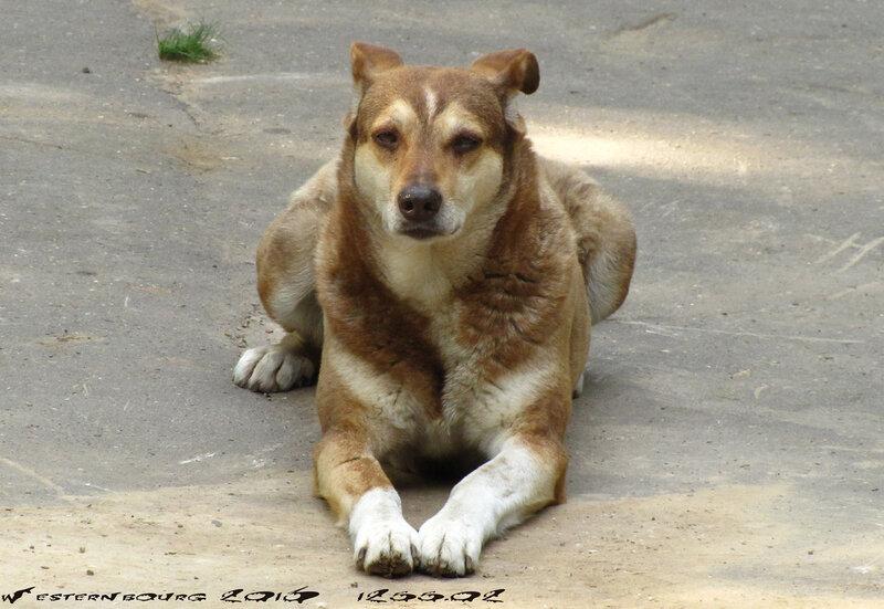 1255.02 Собака-сфинкс