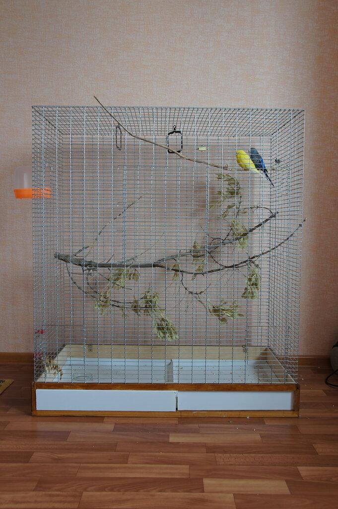 Клетку для попугаев своими руками
