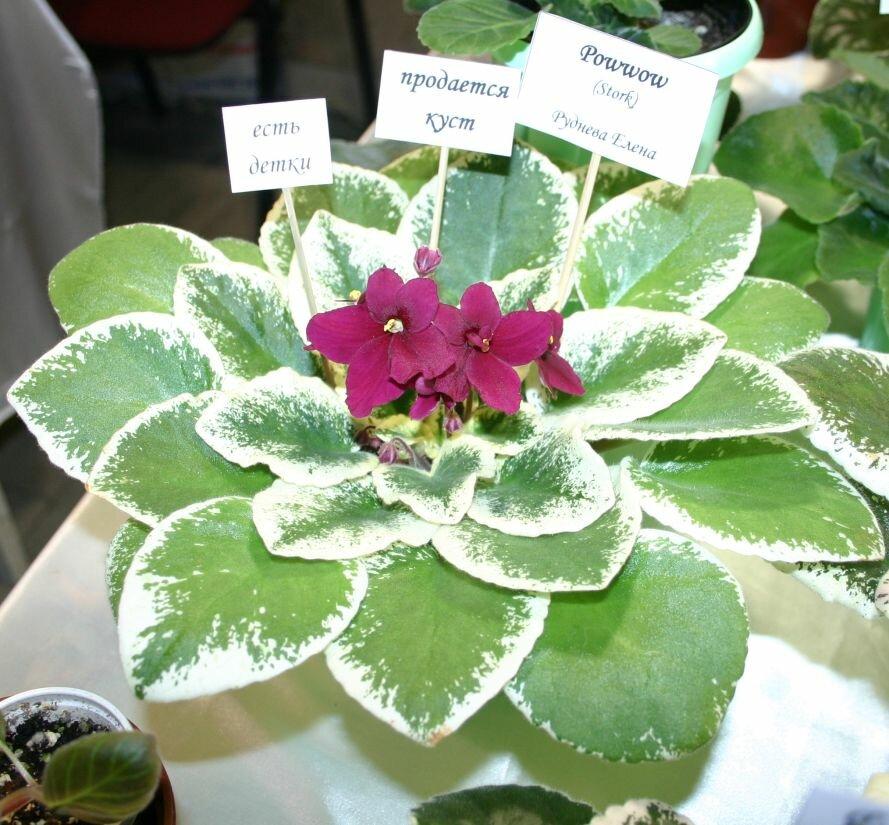 Запорожцы могут увидеть «Зелёную розу» и растение из самого жаркого места планеты (ФОТО), фото-4