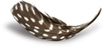 MRD_EggStraSE_feather-sh3.png