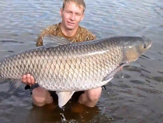 В Тверской области у атомной станции поймана огромная рыба (видео)