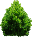 tree_png_by_dbszabo1-d4ftbz1.png