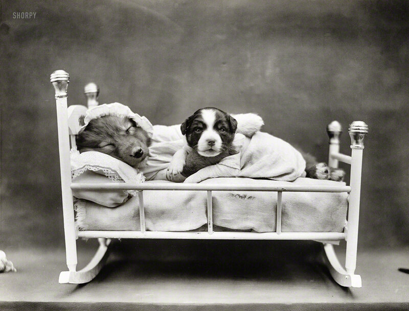 Circa 1914. 'Puppies in rocking crib.' Photo by Harry W. Frees