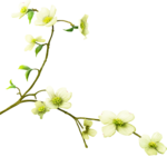 Beautiful-Blossom_birdhouse1 (5).png