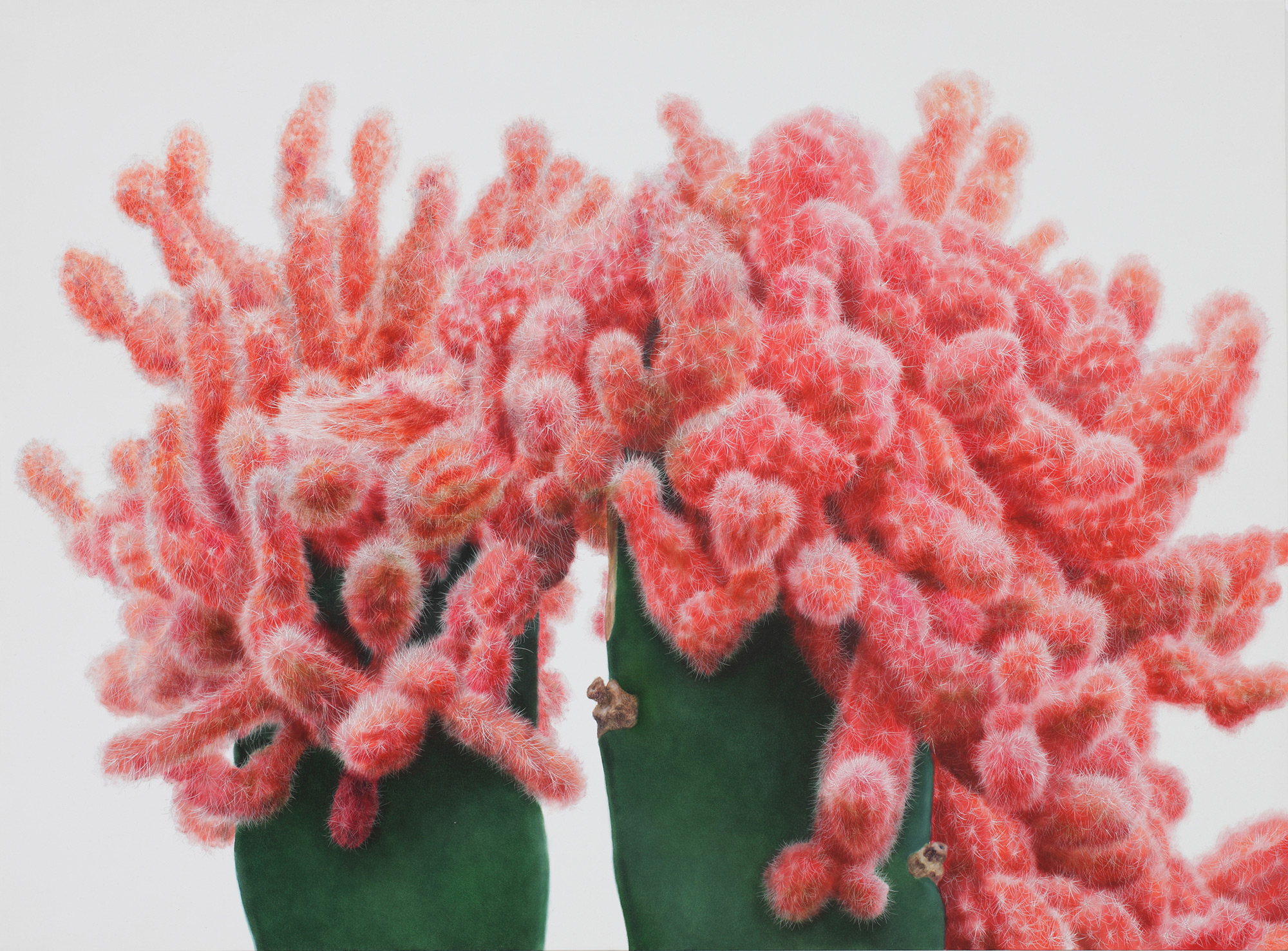 Cactus No. 71 , 2011. Oil on canvas. Courtesy Johyun Gallery.