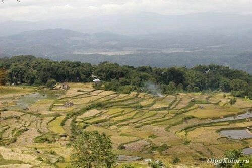 Рисовые террасы вокруг Рантепао