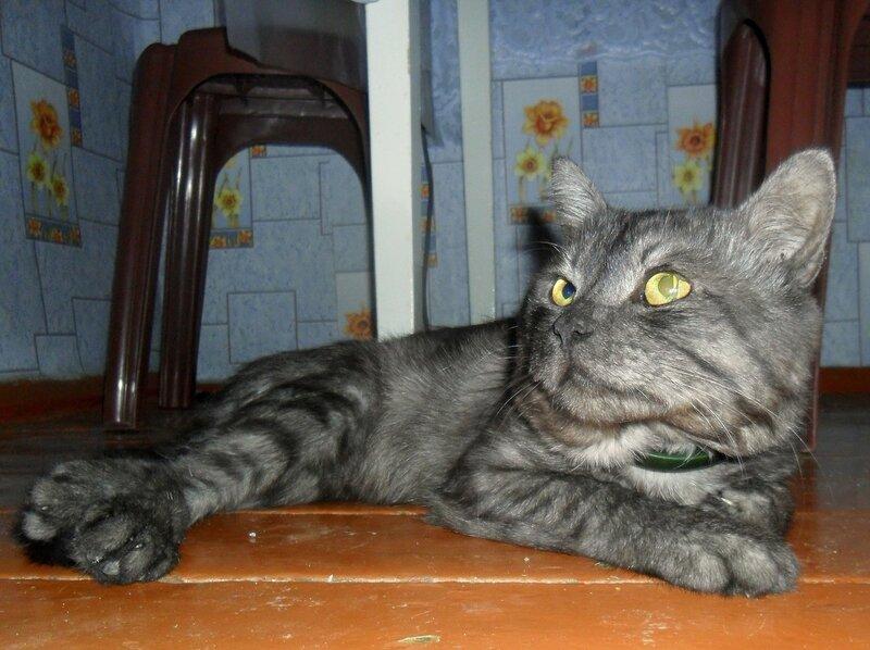Портрет друзей кошачьего мира