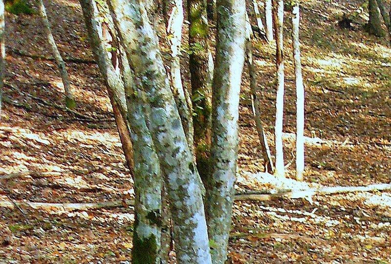 На лесной тропе туристической, под Горячим Ключом, на слёте (188).JPG