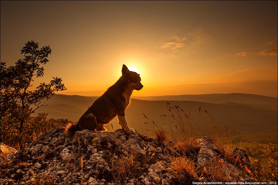 Закатный волчонок