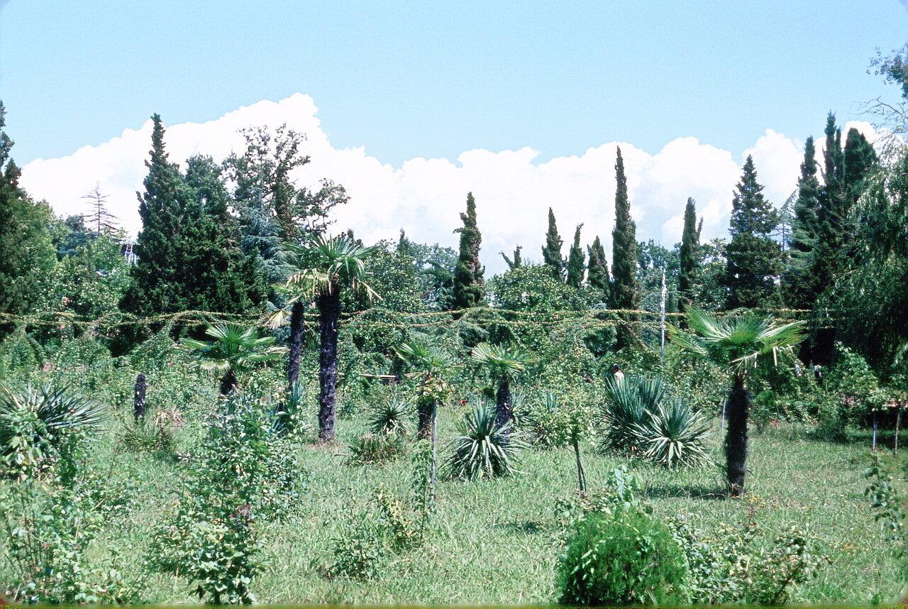 Тропическая растительность в Сочи