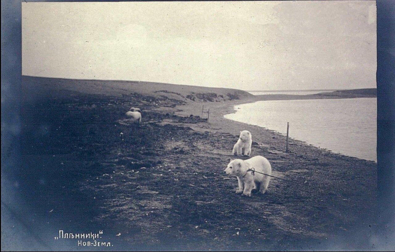Пленники. Новая-Земля ,1911