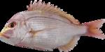 рыба (4).png