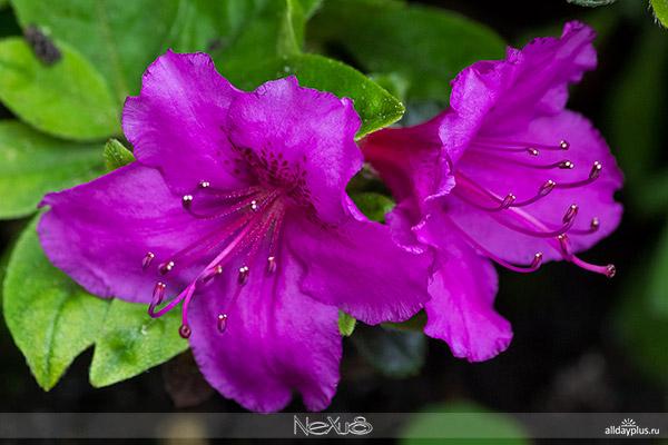 Я люблю все цветы, часть 43