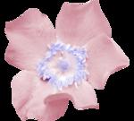цветы_розовые (3).png