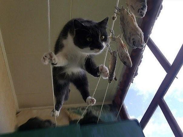 коты не умеют сервировать стол