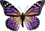 priss_laprimavera_butterfly2.png