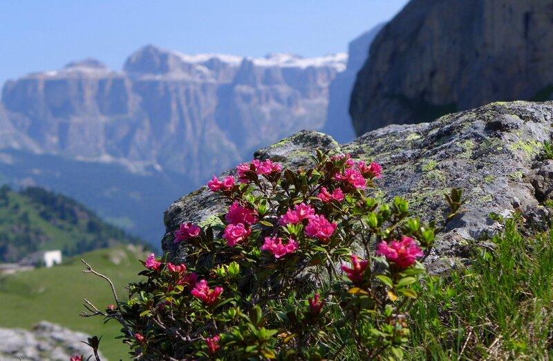 Цветы и скалы