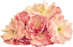 Butterfly Bouquet (51).png