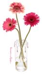 miss_daisy_vase.png
