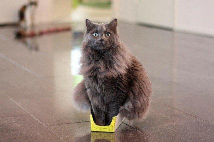 Кот забрался в маленькую коробочку.