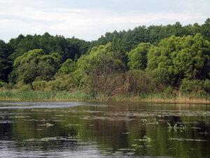 Живописный берег озера со стороны улицы Поповка.