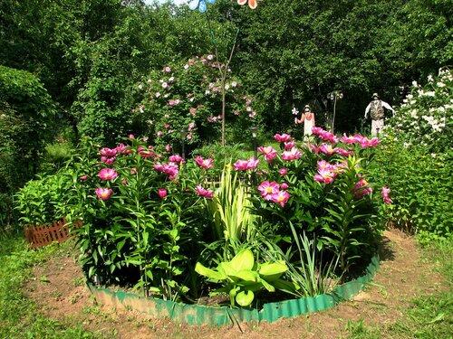 Июньский полдень, цветут пионы