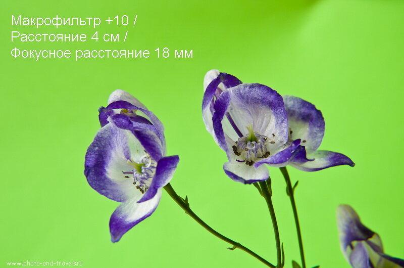 Фотография 10. На малых фокусных расстояниях даже макрофильтр +10 не дает заметного увеличения картинки. Пример использования на Nikon D5100 KIT 18-55 VR.