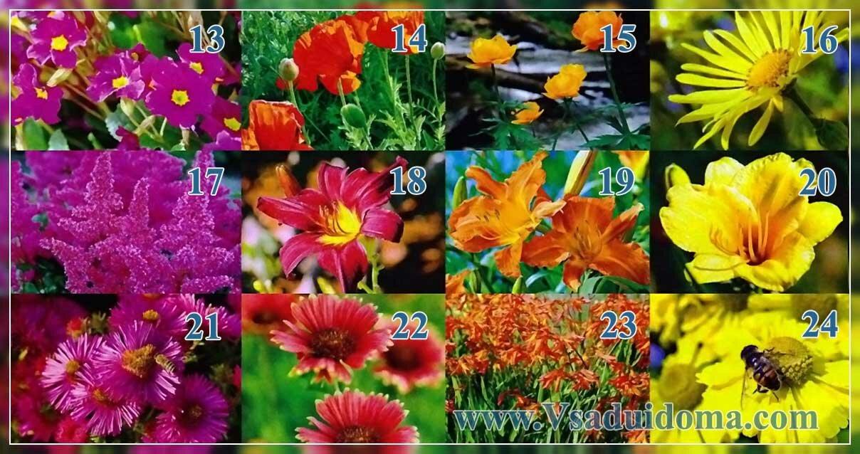 какие цветы посадить в миксбордере
