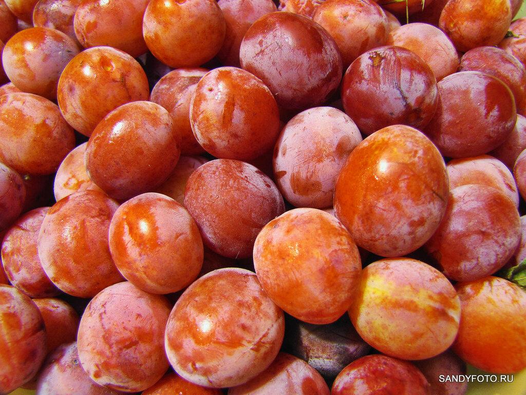 Фотосерия ягоды — слива 2015
