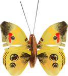 ditab butterfly1a.png