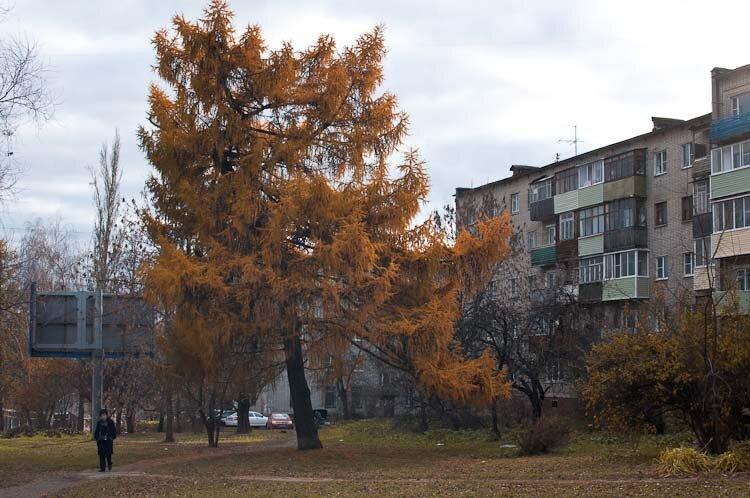Осеннее фото