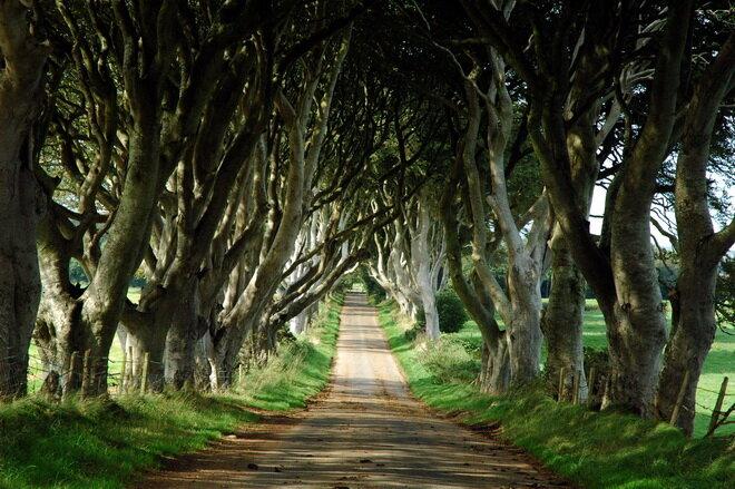 Буковая Аллея в Ирландии