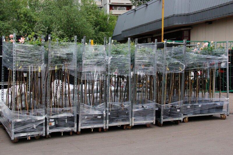 Поступление роз в контейнерах 2013