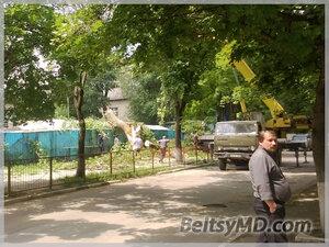 Дерево в Бельцах рухнуло прямо на рынок по ул. Пушкина