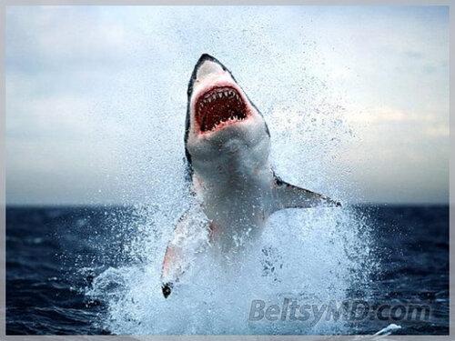В США Акула запрыгнула в лодку к рыбакам