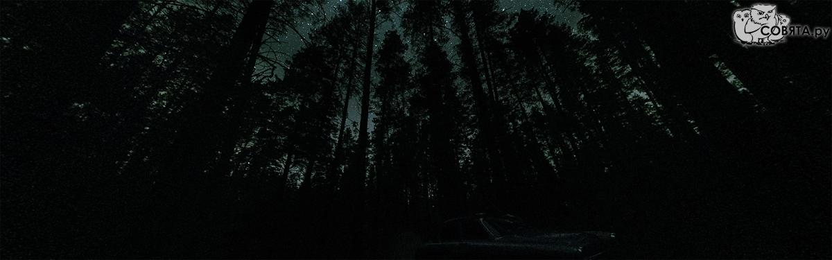 Звёздная ночь в лесу близ села Верх-Кучук
