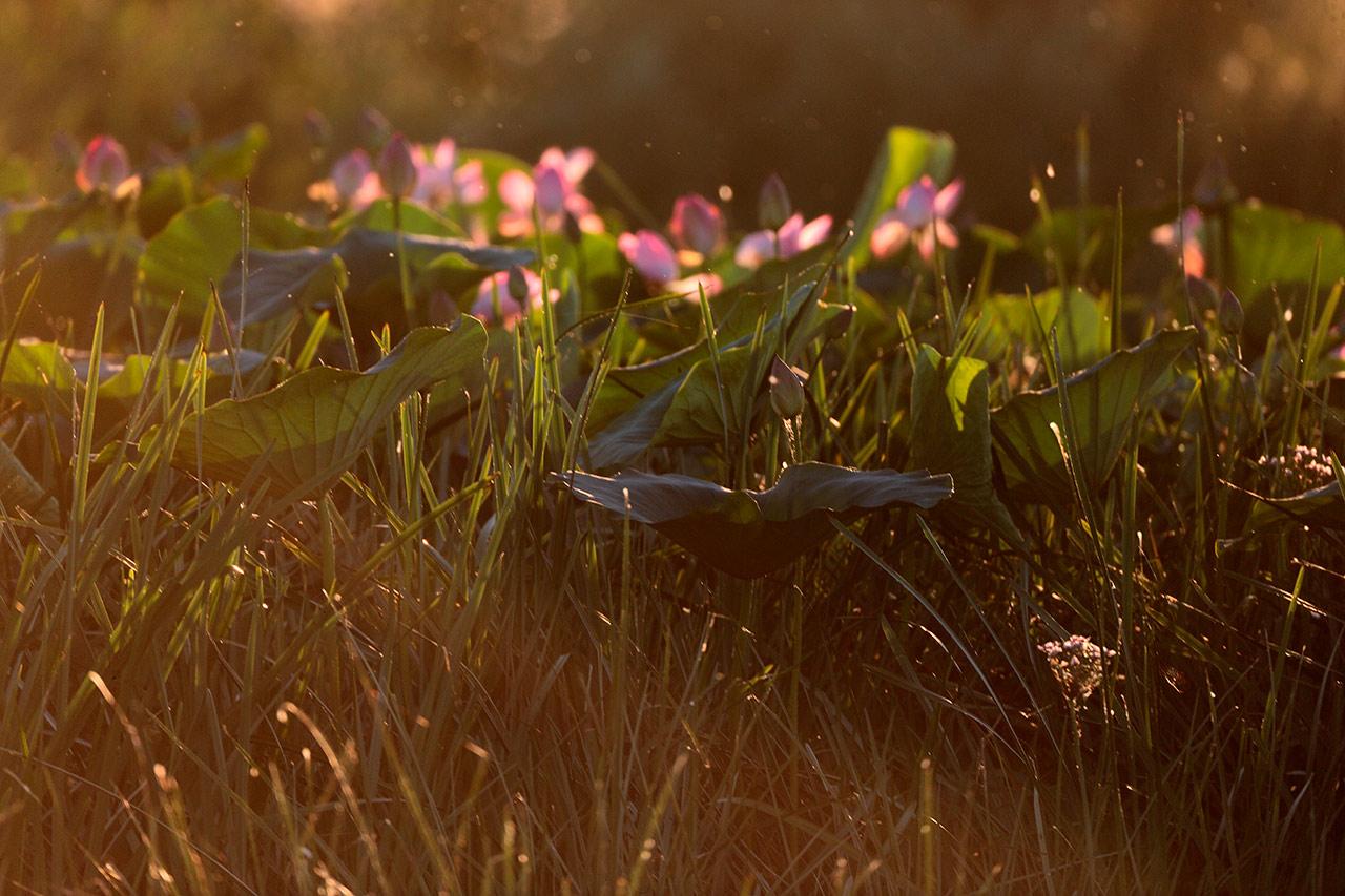 Картинка светящийся цветок