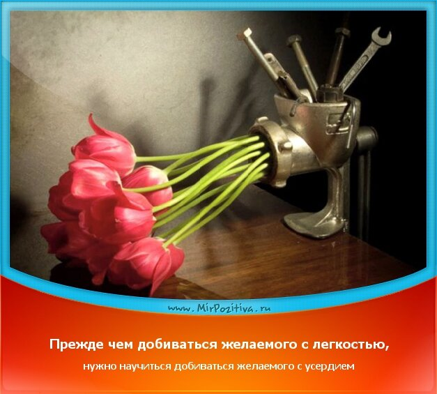 позитивчик дня: Прежде чем добиваться желаемого с легкостью, нужно научиться добиваться желаемого с усердием