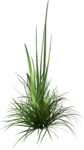 Bush and Grass  (138).png