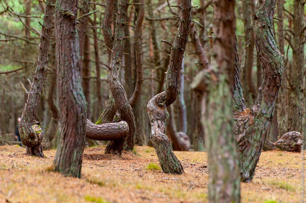 Секс на деревия фото 68-27