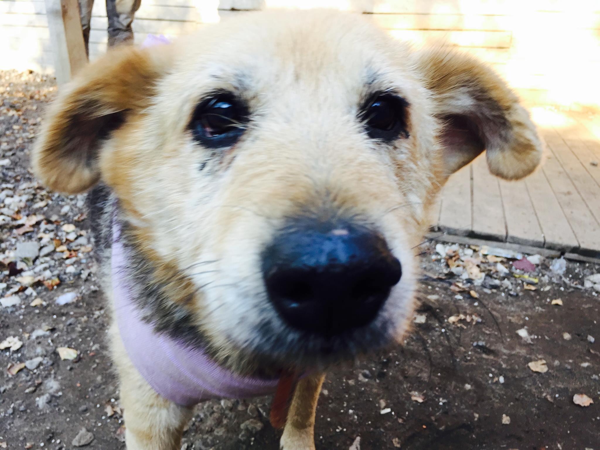Лиза собака из приюта догпорт