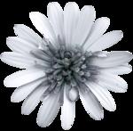 feli_ss_blue flower.png