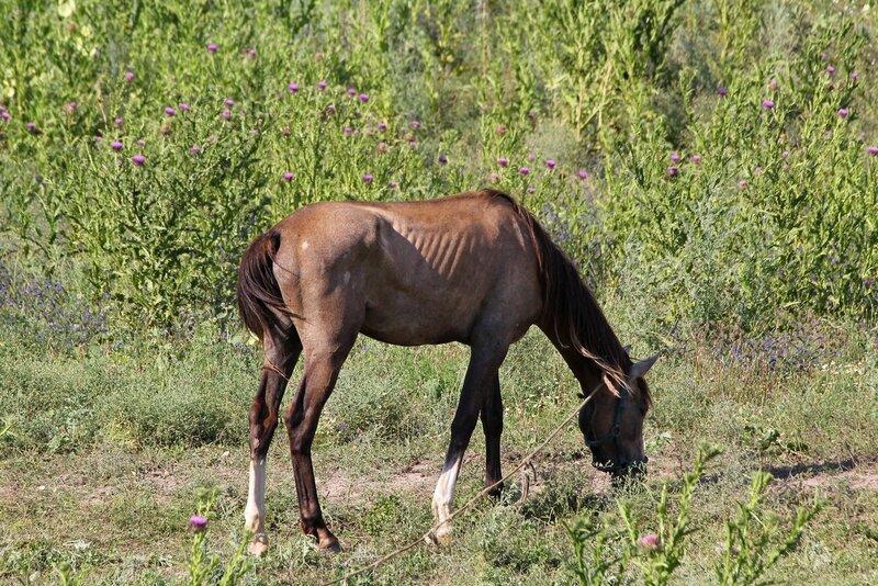 Лошади, кони и жеребята в пещерном городе Эски-Кермен, Крым IMG_5844.JPG