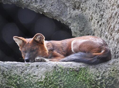 Латинская Америка дарит новые виды животных