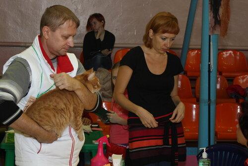"""Международная выставка кошек """"Удивительные кошки"""", 5-6 октября 2013, г. Сургут, ХМАО 0_ddae9_75cf8470_L"""