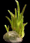 vesidn_seamemories_grass3.png