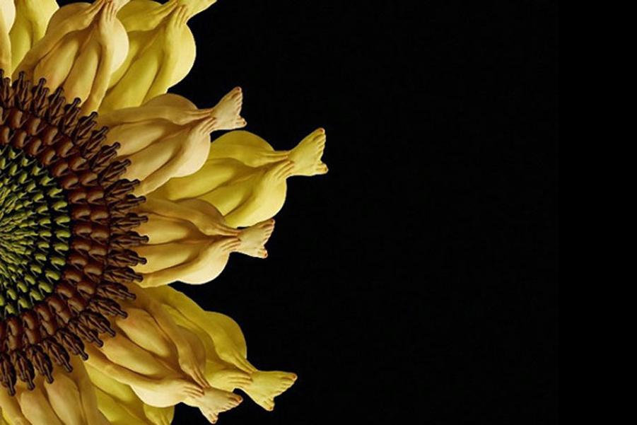 Цветы и бабочки из обнаженного тела