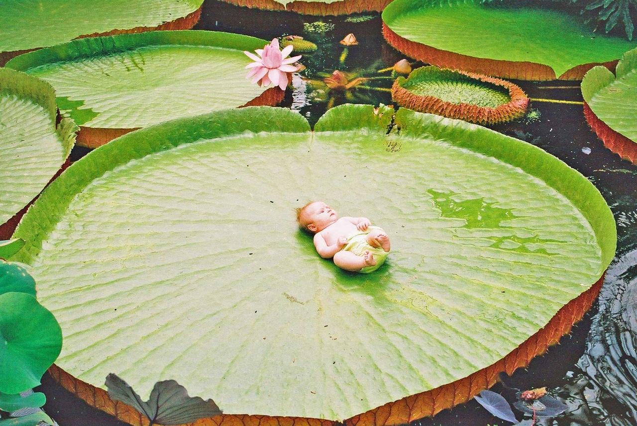 Драцена белый налет на листьях  Цветы