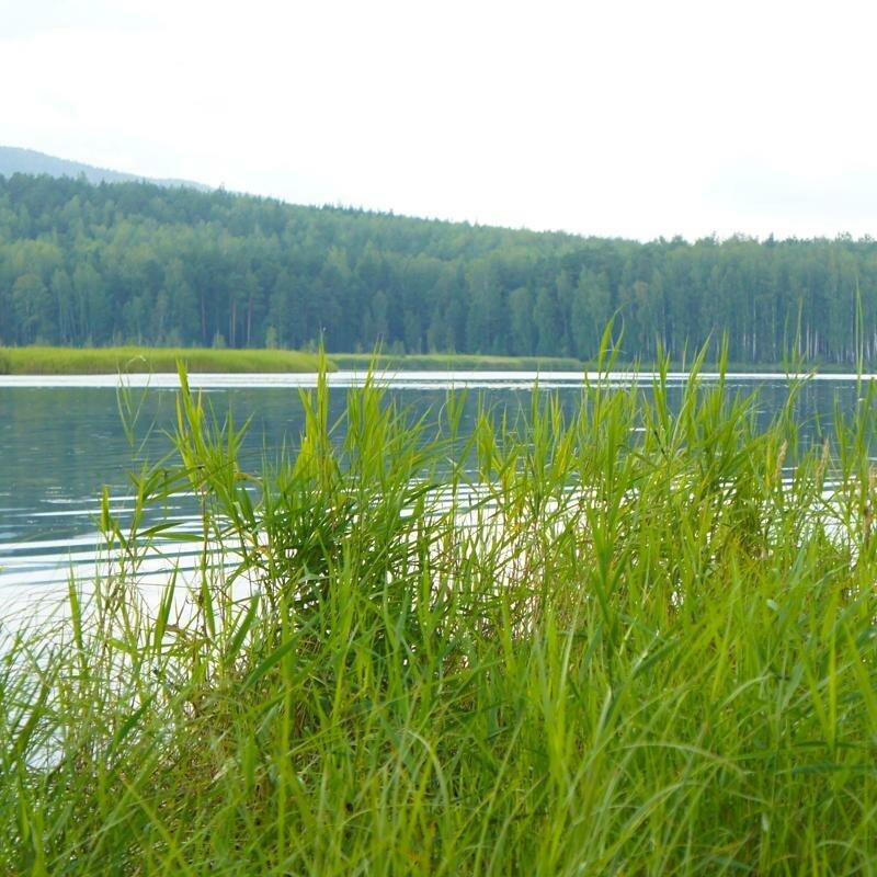 Берега озера заросли травой (16.05.2013)