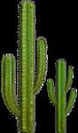 cactus (38).png